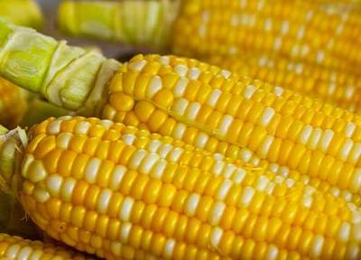 corn,kitchen,freezer,kitchen tips,frugal