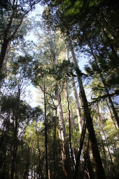 Forest at Mount Field, image by Sam Page