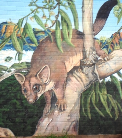Possum street art