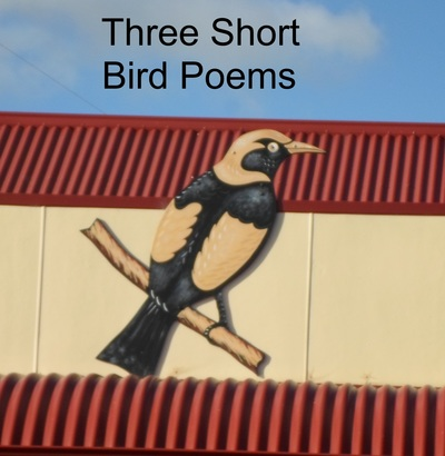 Three short bird poems